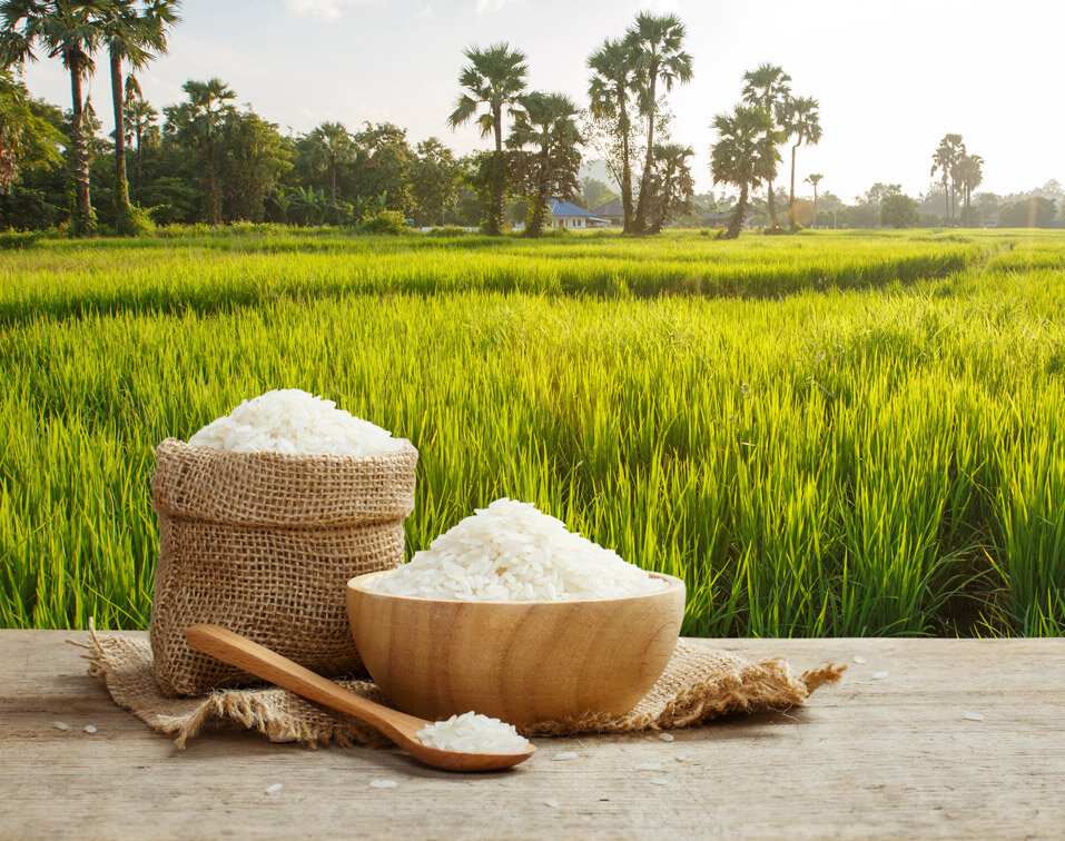 Improving water productivity vital for sustainable rice production
