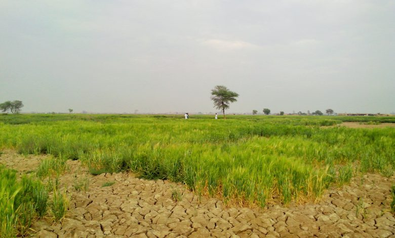 Agricultural challenges: Declining soil fertility threatens crop production