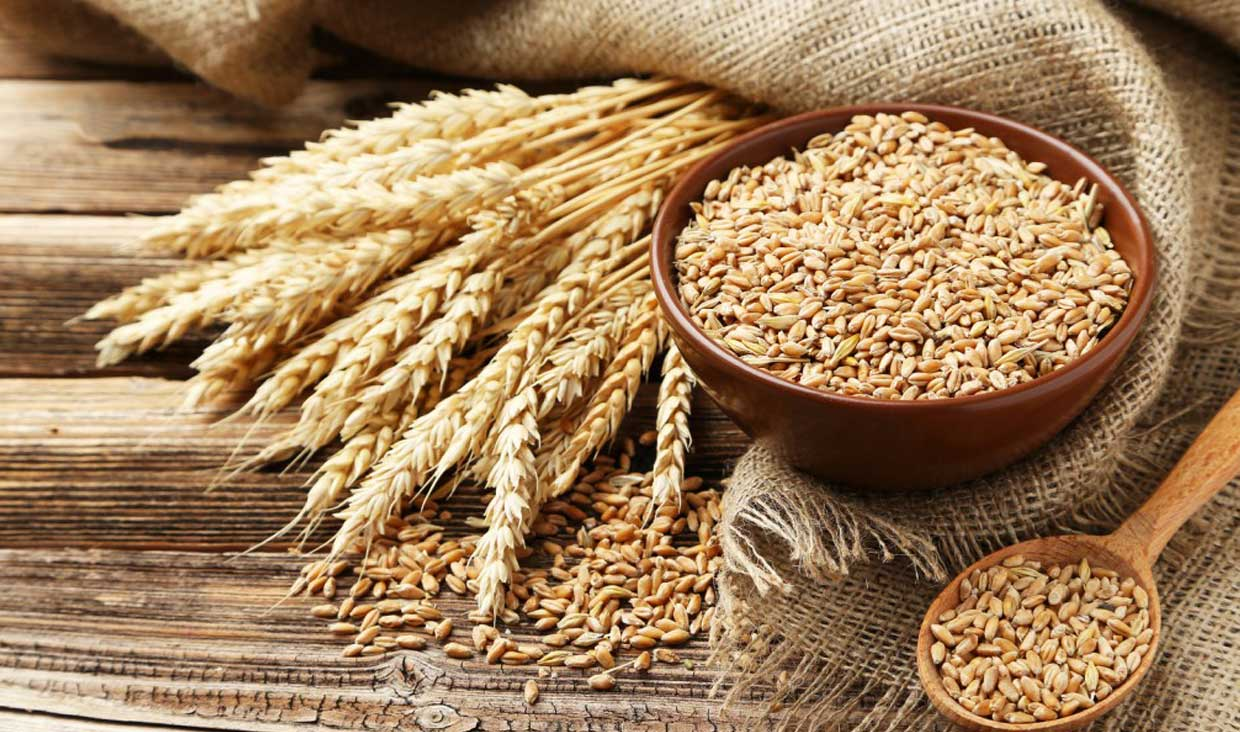 Wheat support price increased to Rs1,350